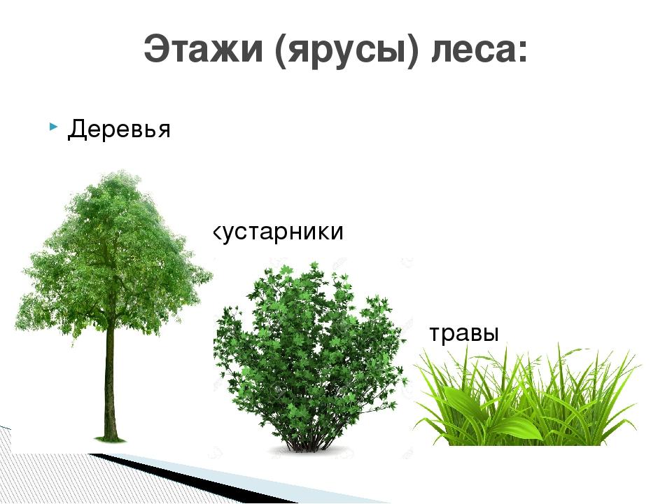 картинки групп растений деревья кустарники и травы бесшовном исполнении