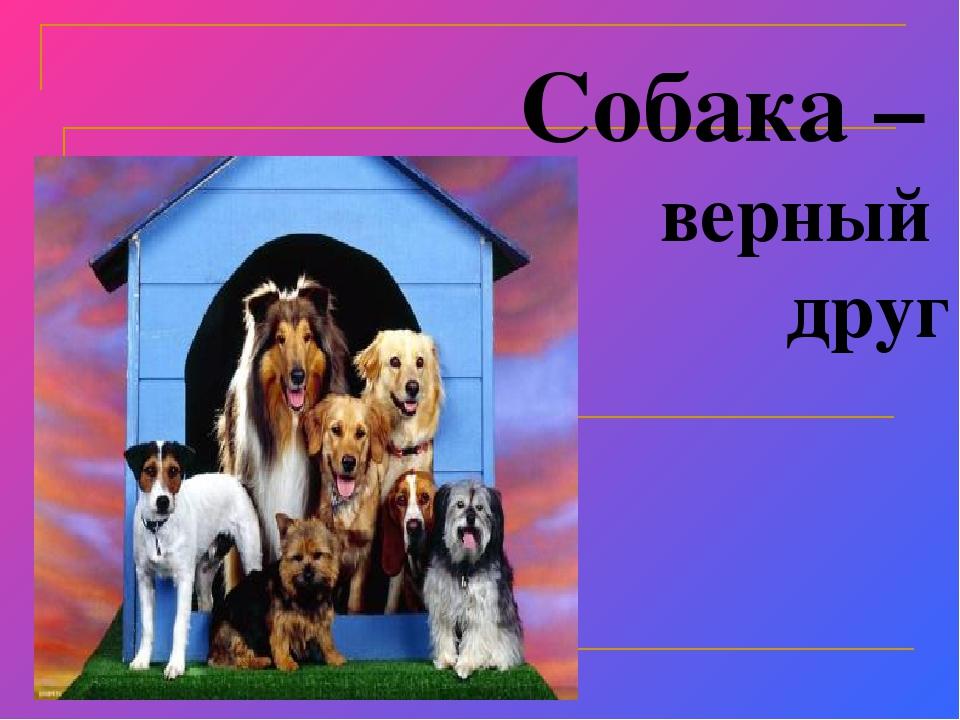собаки наши верные друзья картинки удовольствием снимаю