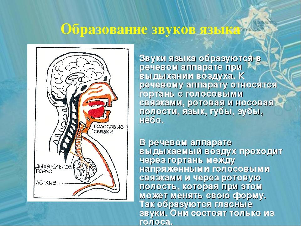 Образование звуков языка Звуки языка образуются в речевом аппарате при выдыха...
