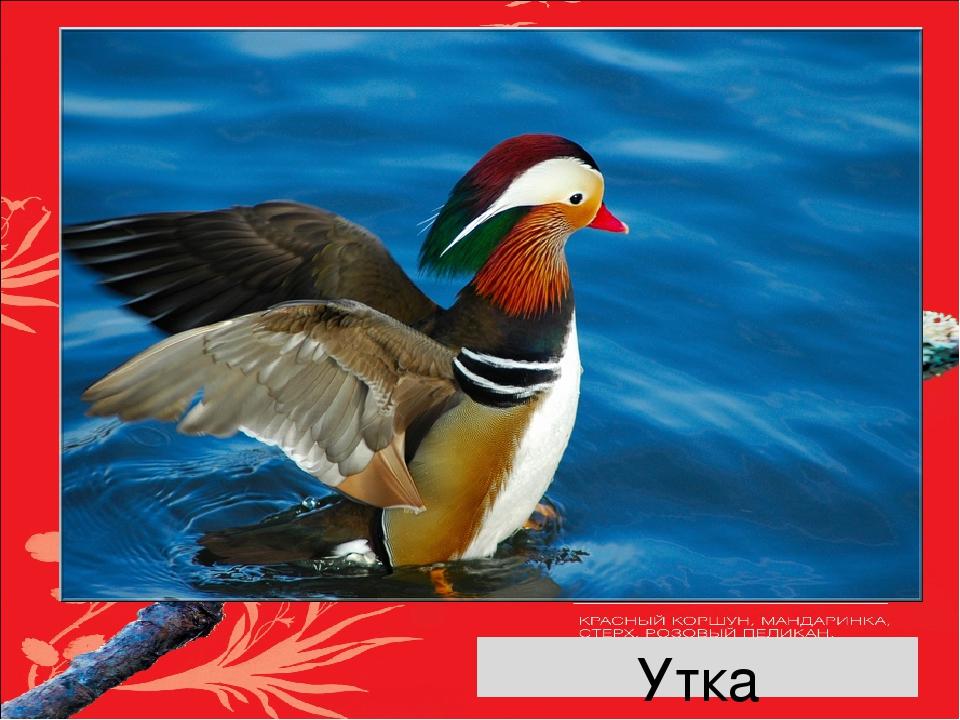 Красная книга россии птицы картинках