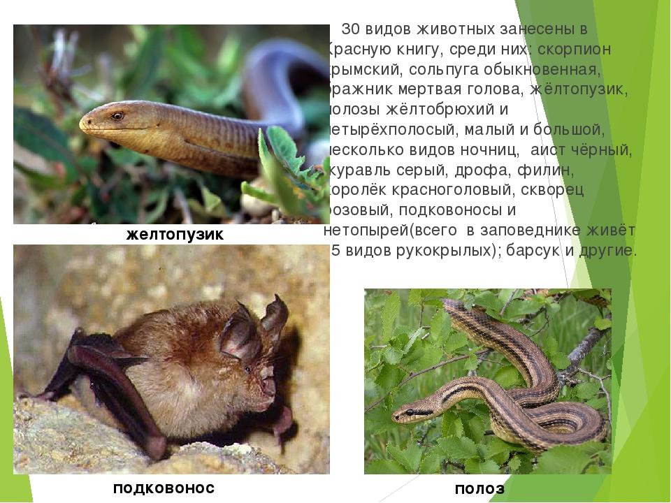 Редкие животные крыма занесенные в красную книгу фото и описание
