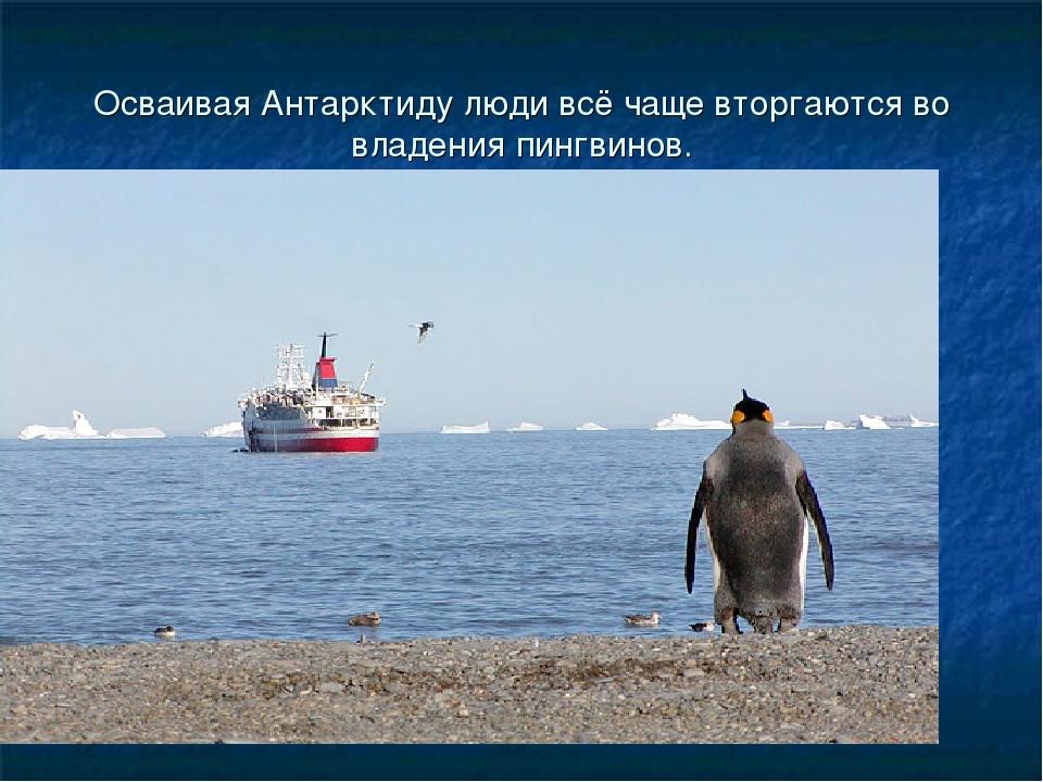 Осваивая Антарктиду люди всё чаще вторгаются во владения пингвинов.