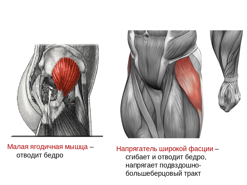Средняя ягодичная мышца фото