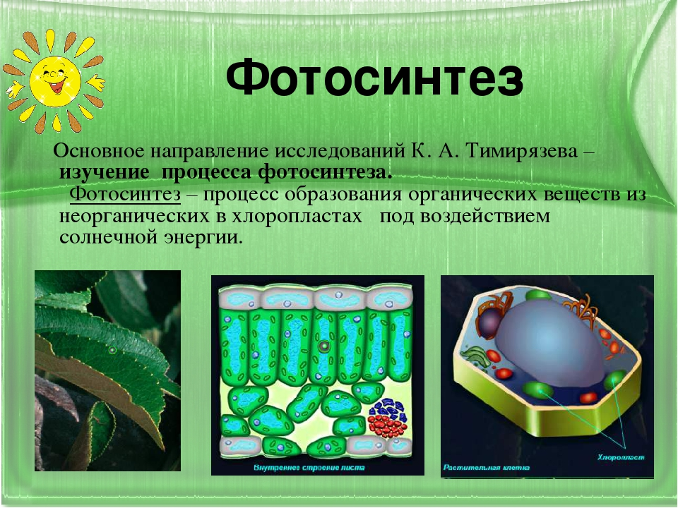 того, должны опыт тимирязева фотосинтез простым