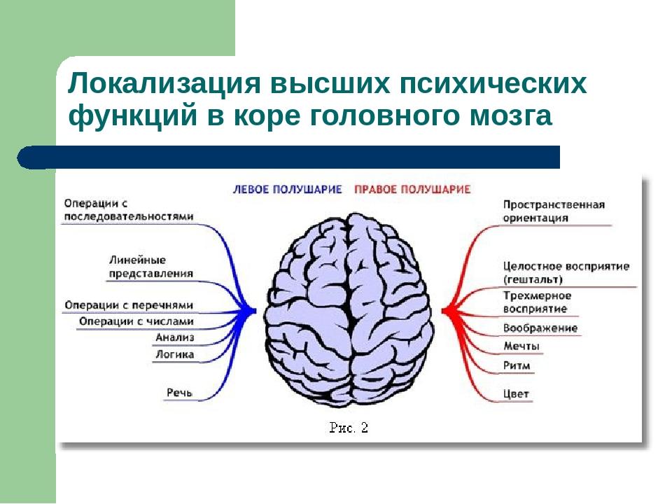 Картинки высшие психические функции