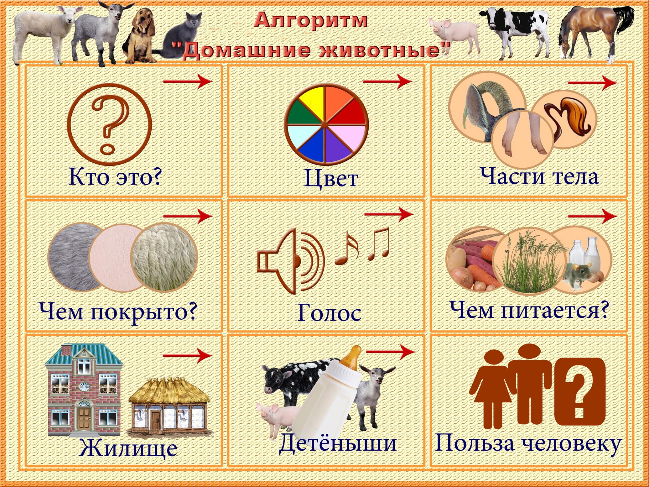 Схема составления рассказа о домашнем животном картинка
