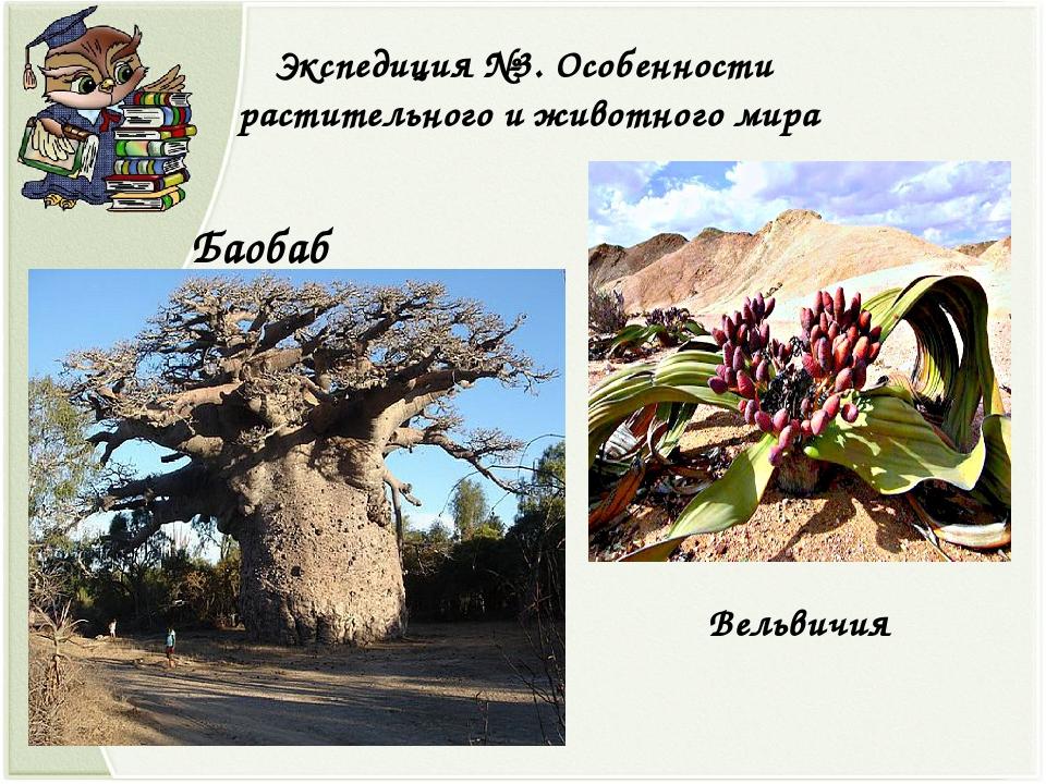Экспедиция №3. Особенности растительного и животного мира Баобаб Вельвичия