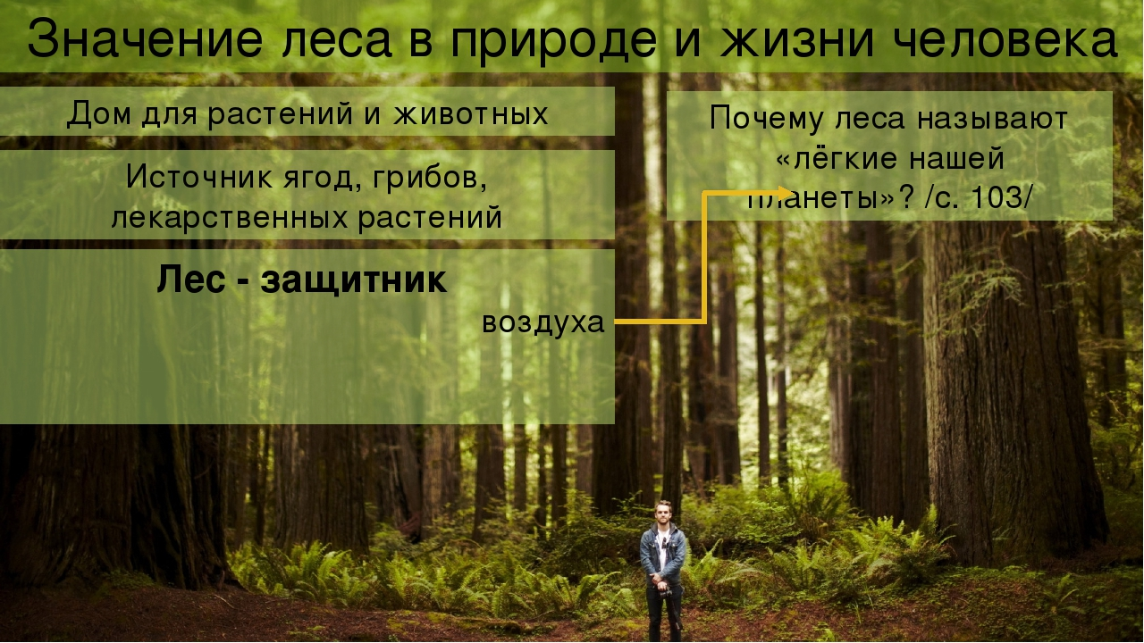 Лес источник кислорода доклад 7842