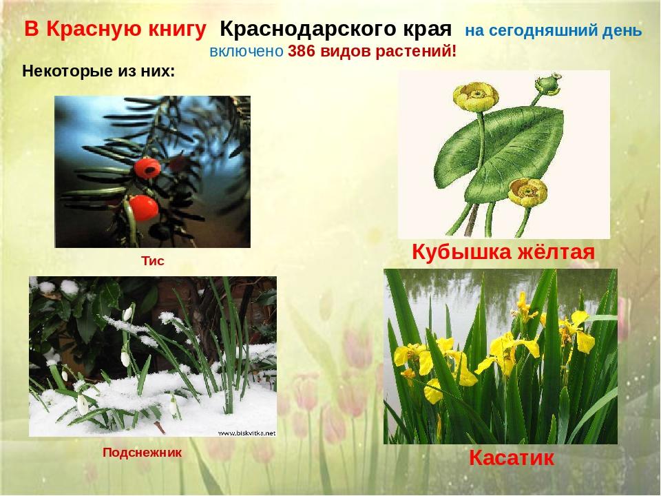 Красная книга кубани животные фото и названия