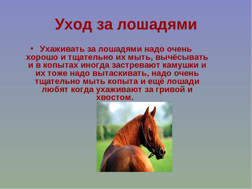 картинки слайды о лошадях том