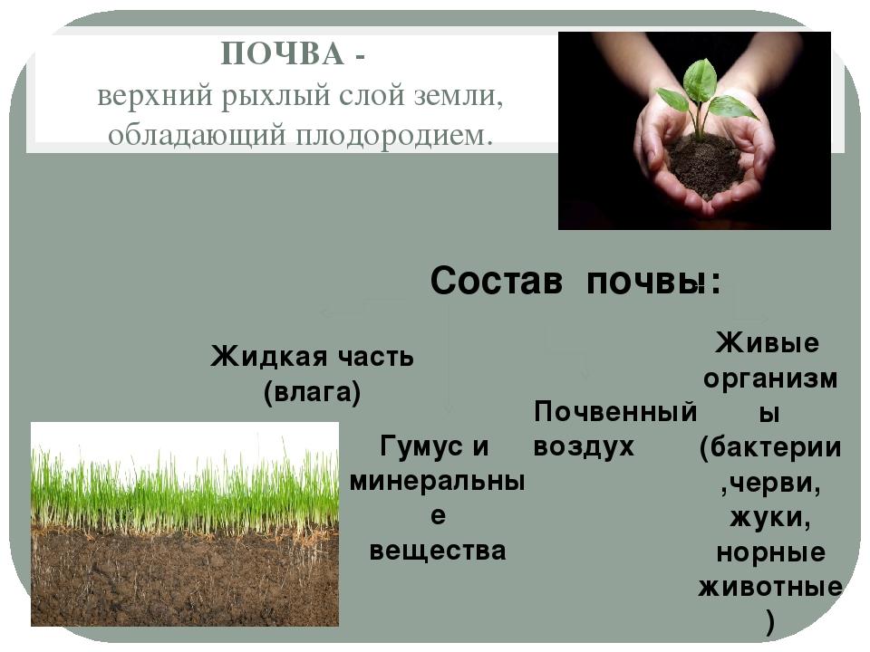 ПОЧВА - верхний рыхлый слой земли, обладающий плодородием. Состав почвы: Жидк...