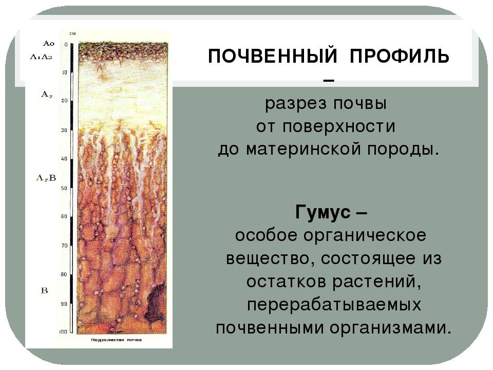 ПОЧВЕННЫЙ ПРОФИЛЬ – разрез почвы от поверхности до материнской породы. Гумус...