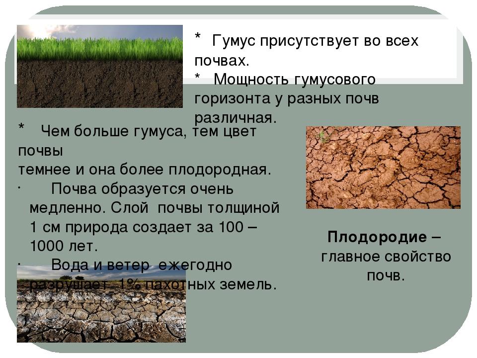 * Гумус присутствует во всех почвах. * Мощность гумусового горизонта у разных...