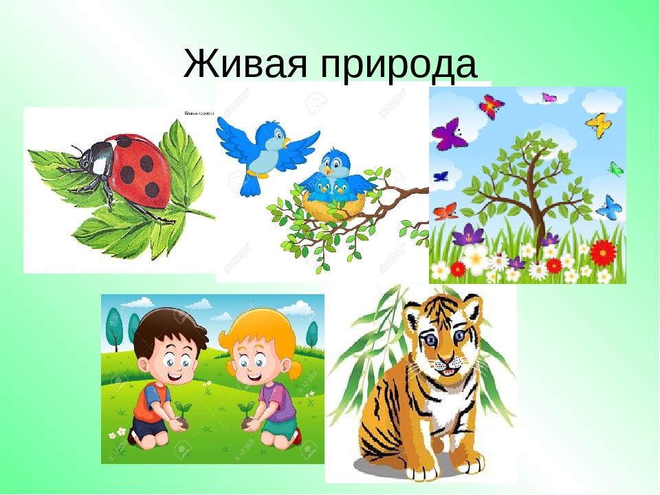 Картинки живая природа для детей, изготовлению пригласительных