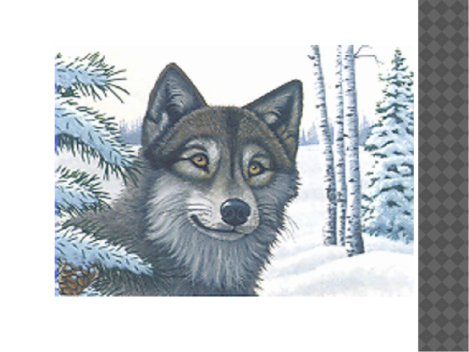 картинки раскраски животные не сложные