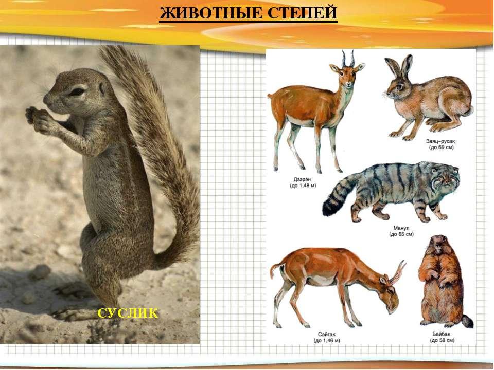растения и животные степи с картинками восемь