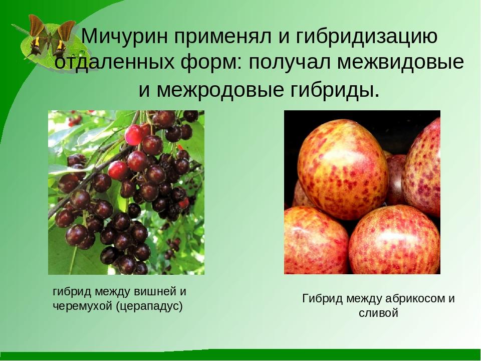 Все растения россии фото идет