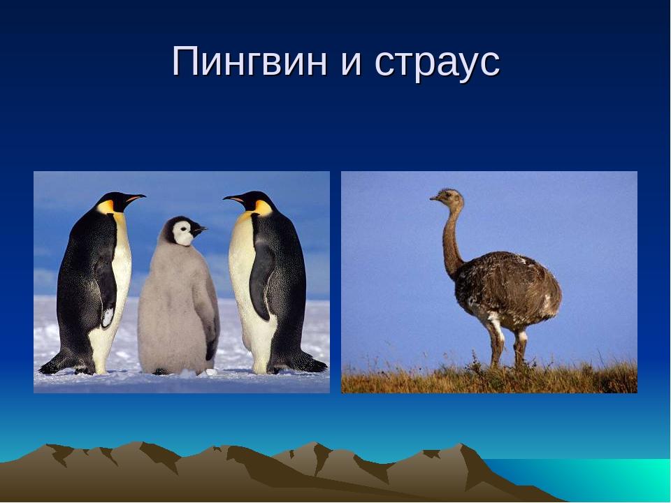 какие страус пингвин картинки котята фильме