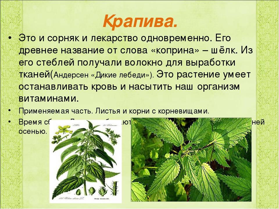 Картинка и что то о лекарственном растении