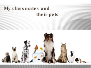 My classmates and their pets