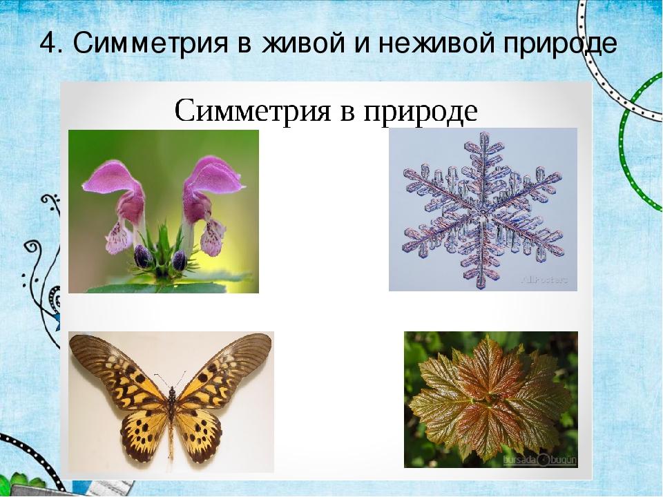 примеры симметрии в природе картинки для фото