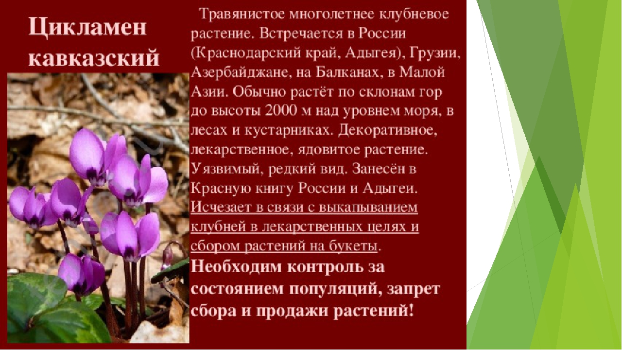 картинки растений из красной книги краснодарского края можете почитать