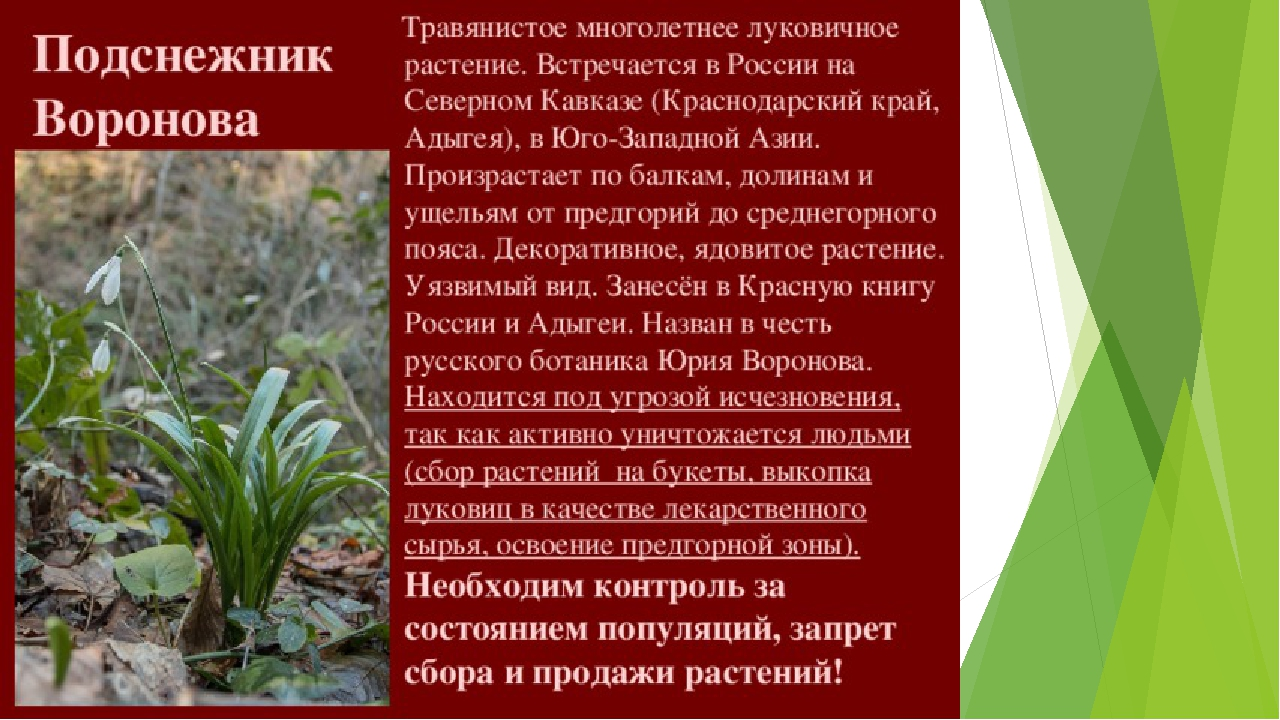 Растения краснодарского края фото и описание