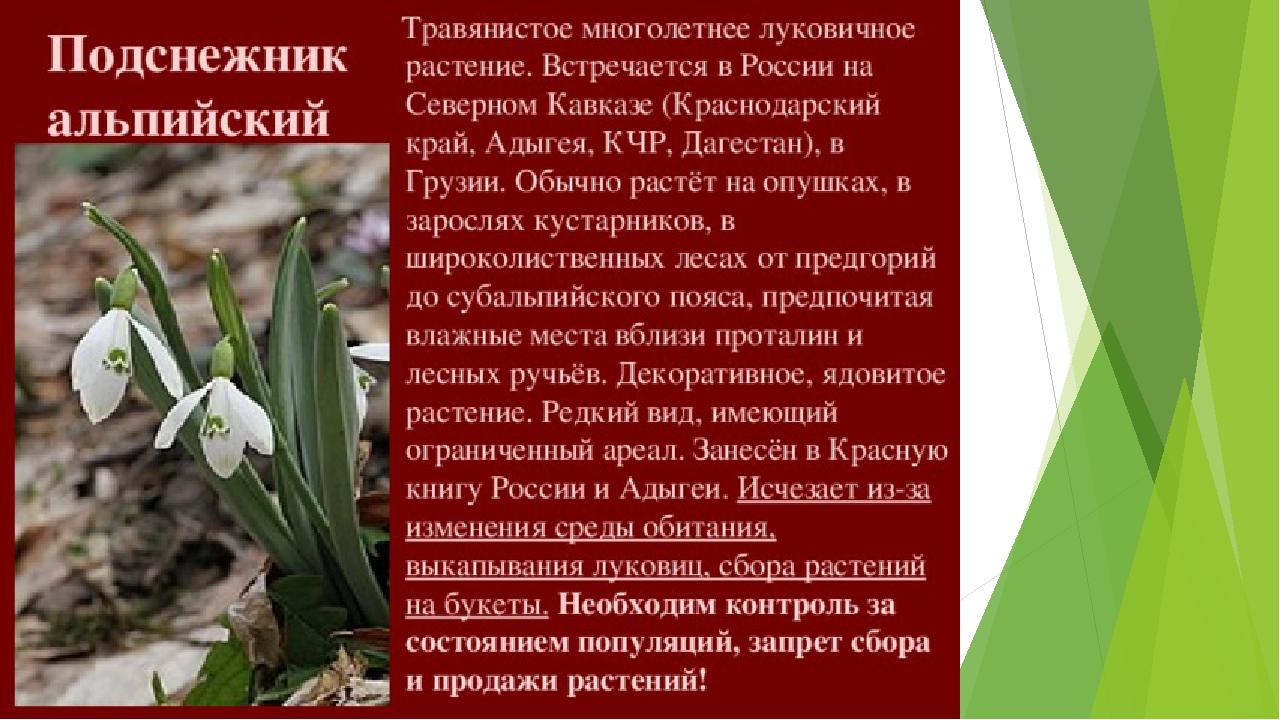 россии картинки растений из красной книги краснодарского края поверхность