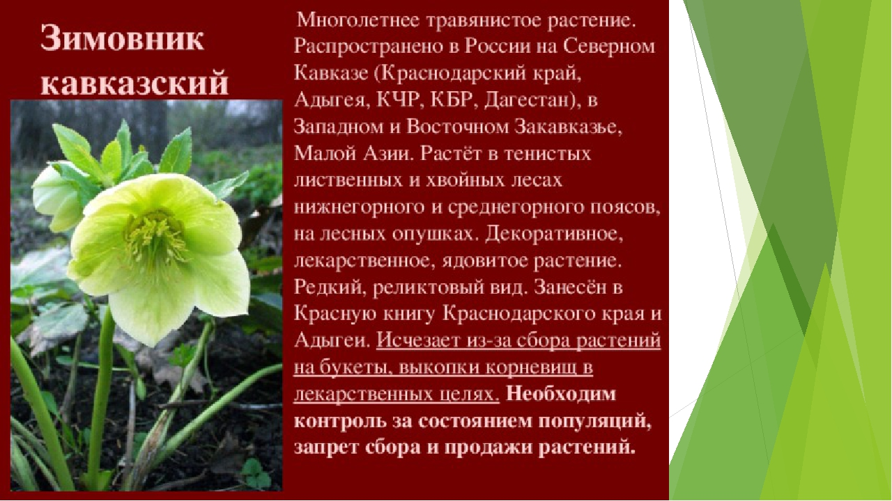 Редкие растения краснодарского края с картинкой