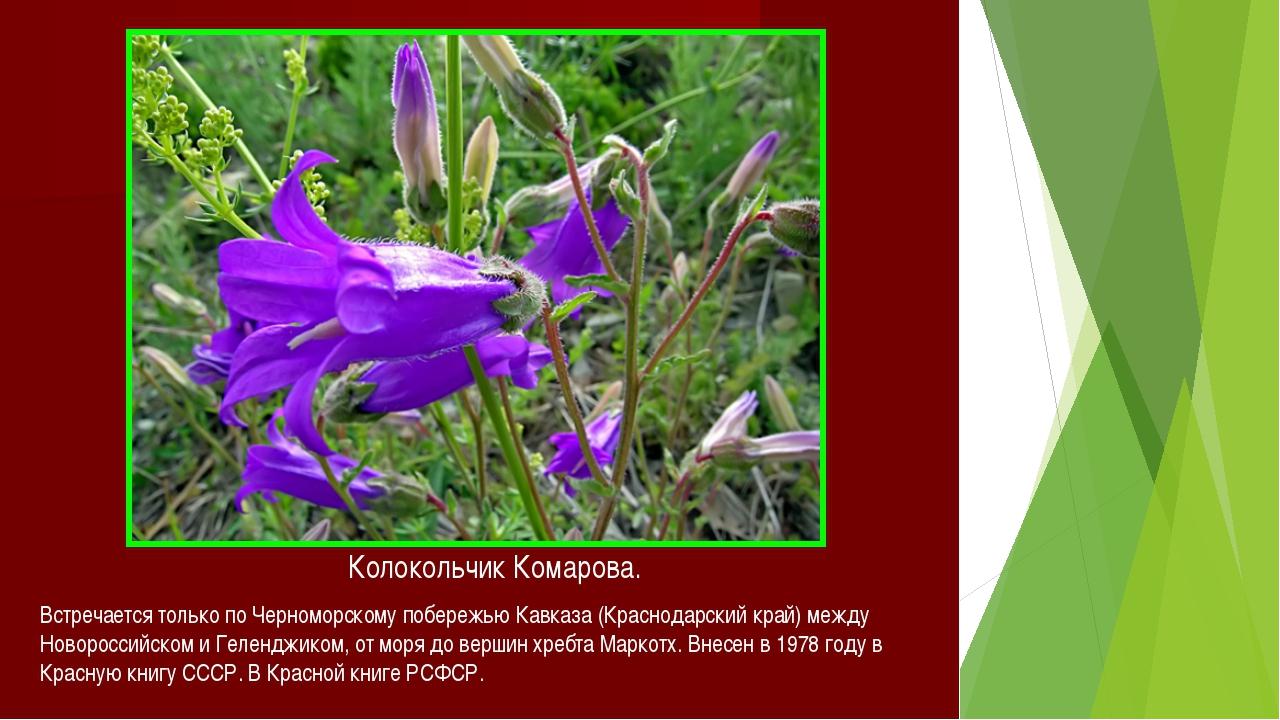 Цветы красной книги краснодарского края