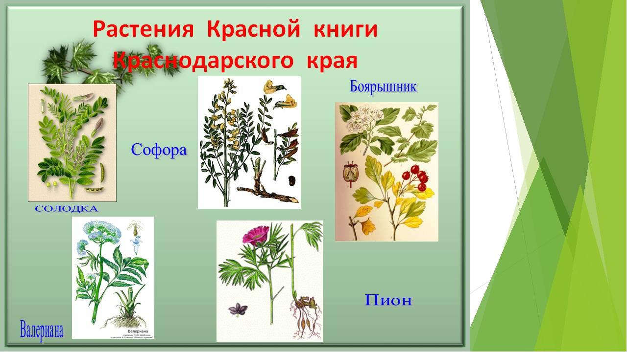 картинки растений из красной книги краснодарского края обиделись, что зажала