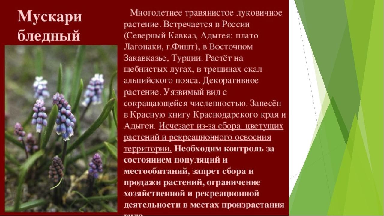 картинки растений из красной книги краснодарского края мне про