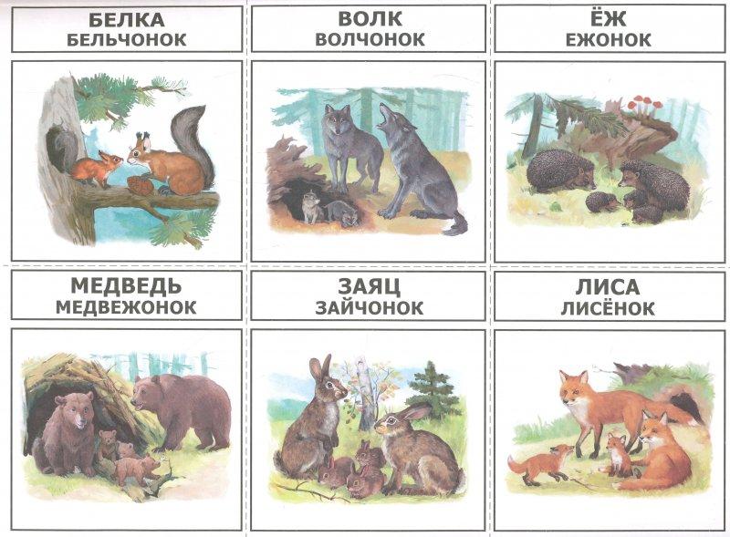Феврали, дикие животные и их детеныши картинки для детей дидактический материал