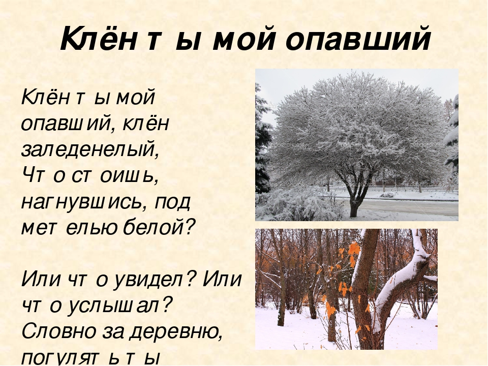 Клён ты мой опавший есенин стихи