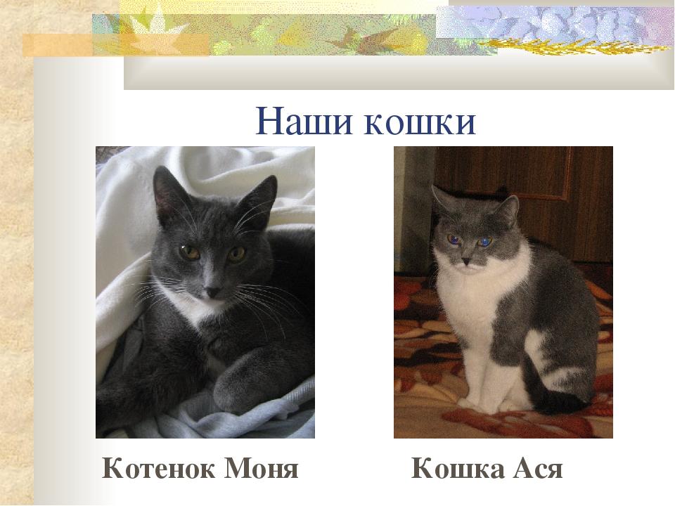 Наблюдение за домашними кошками реферат 7388