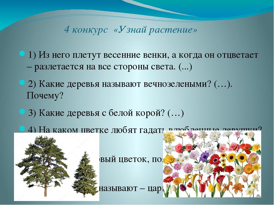 4 конкурс «Узнай растение» 1) Из него плетут весенние венки, а когда он отцве...
