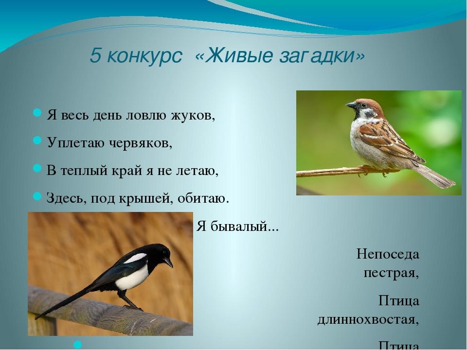 5 конкурс «Живые загадки» Я весь день ловлю жуков, Уплетаю червяков, В теплый...