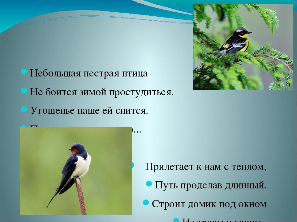 Небольшая пестрая птица Не боится зимой простудиться. Угощенье наше ей снитс...