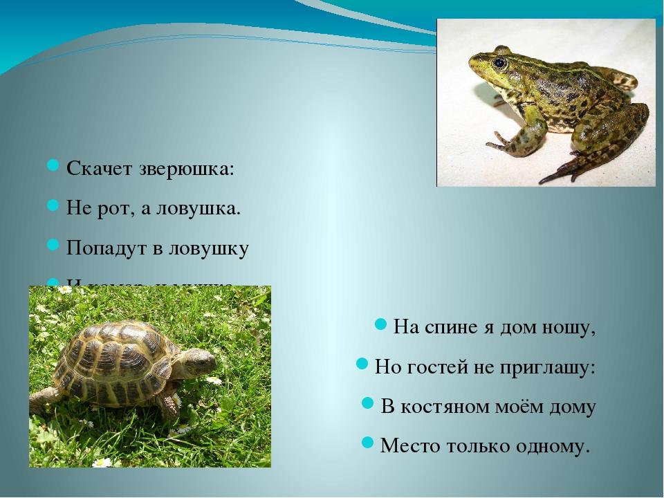 Скачет зверюшка: Не рот, а ловушка. Попадут в ловушку И комар, и мушка. На с...