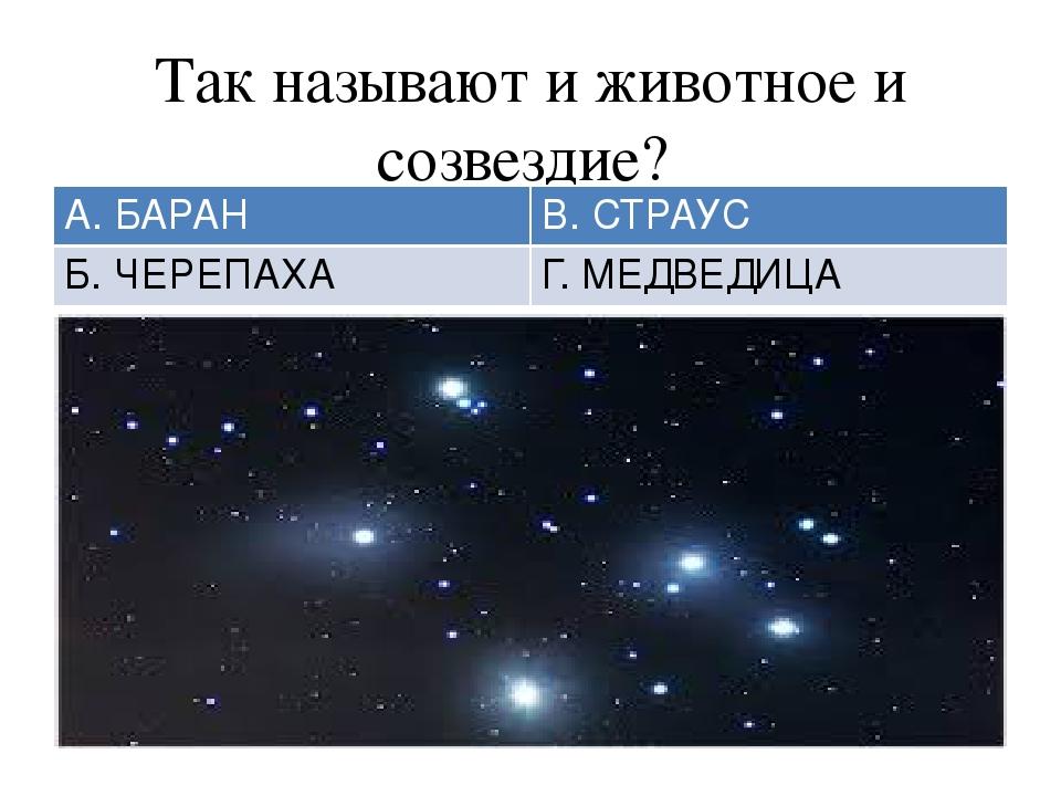 Так называют и животное и созвездие? А. БАРАН В. СТРАУС Б. ЧЕРЕПАХА Г. МЕДВЕД...