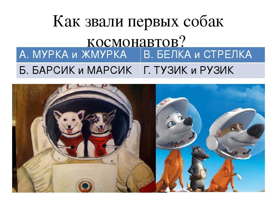 Как звали первых собак космонавтов? А. МУРКА иЖМУРКА В. БЕЛКА и СТРЕЛКА Б. БА...