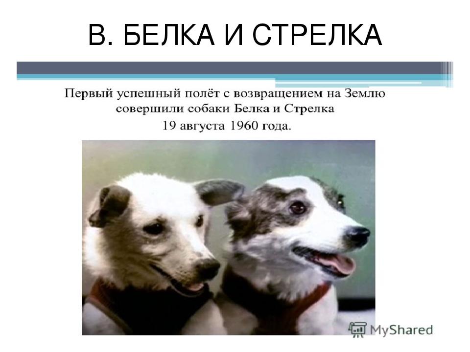 В. БЕЛКА И СТРЕЛКА