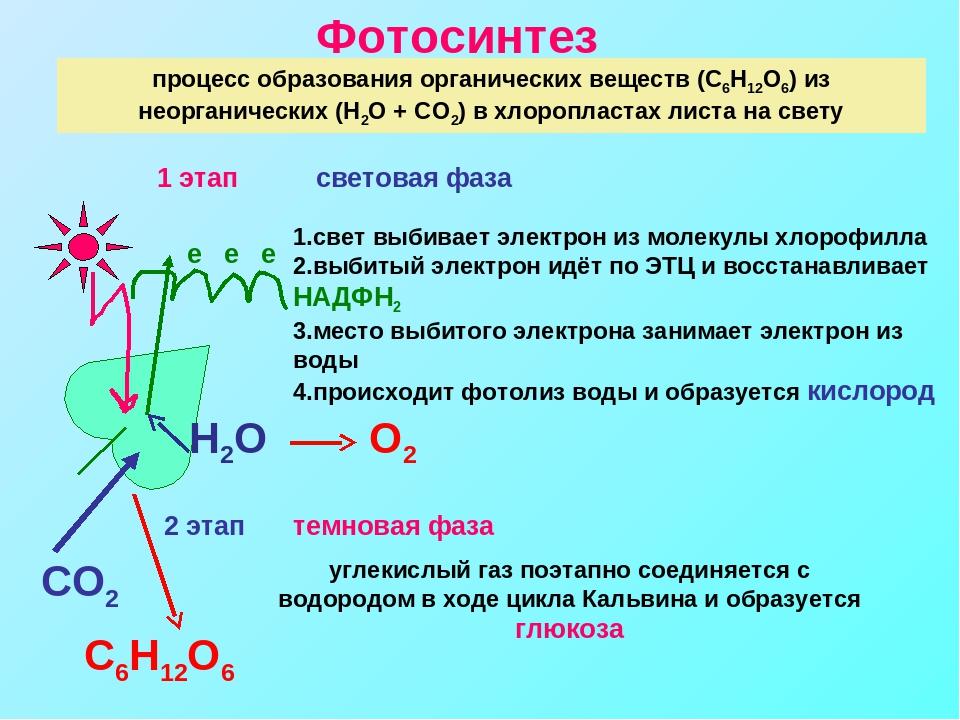тому фотосинтез кратко конспект что стоит обратить