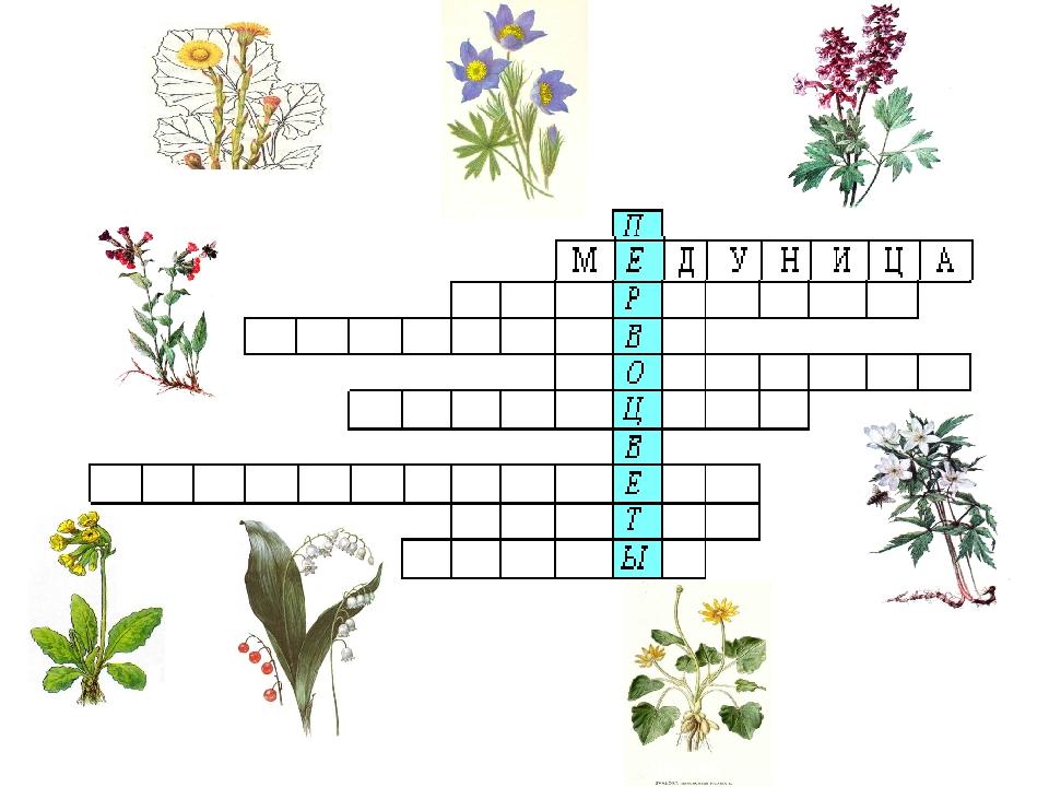 кроссворды о растениях в картинках разукрашки сытный вариант обычных