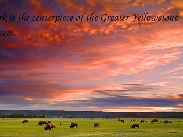 The park is the centerpiece of the Greater Yellowstone Ecosystem.