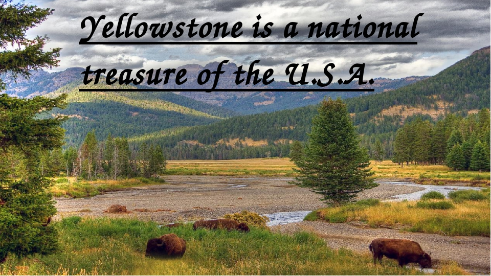 Yellowstone is a national treasure of the U.S.A.