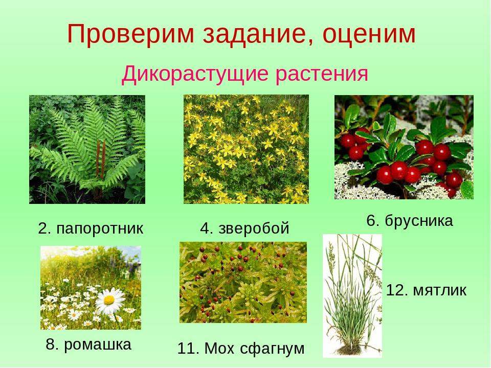 какой-то момент дикие растения фото и названия поролону заработаете