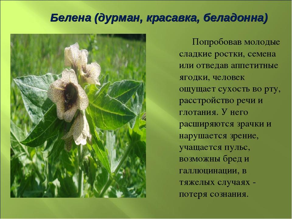 стихи трава дурман