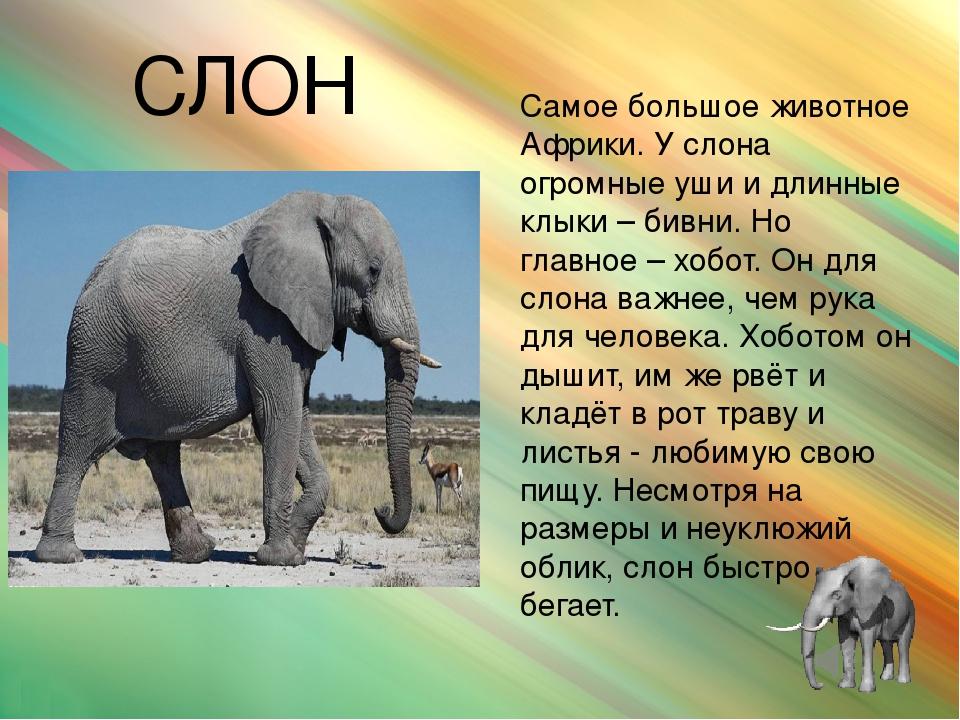 Доклады о животных с картинками