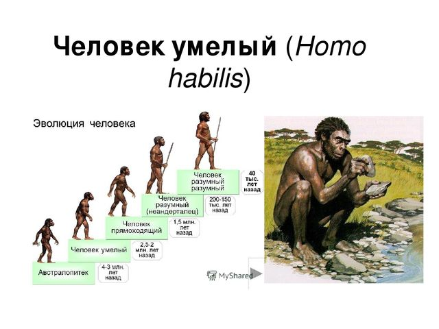an in depth overview of mans ancestor homo habilis Homo habilis essay examples a description of homo habilis as the most recent ancestor of man an in-depth overview of man's ancestor 'homo habilis.